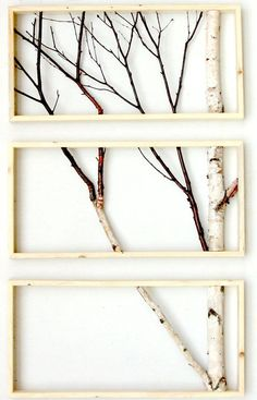 Framed birch tree branches More