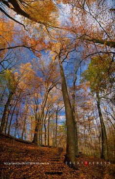 Week 45 - Joyce Kilmer's 1913 supposition, equating the verbal to the arboreal, taken at face value would render this vista as an entire famous fall anthology. It is four images composited together from an exceedingly fine autumn afternoon at White Clay State Park in Delaware.