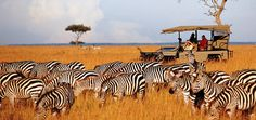 Best of African Safari to Kenya and Tanzania tourist attractions. Book now to enjoy wildlife adventure tours, beach and safari holidays, excursions. Kenya Travel, Africa Travel, Safari Holidays, Tanzania Safari, Wildlife Safari, African Safari, African Elephant, Beautiful Places To Visit, Amazing Places