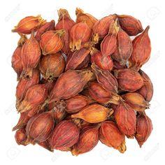 Zhi Zi (Gardenia Fruit)  栀子
