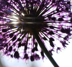 {Simply Seductive : a lifestyle & fashion blog}: Inspiration: {Vibrant Violets}