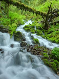 Lush Forest Stream in Spring, Columbia River Gorge, Oregon