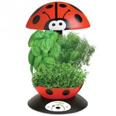 AeroGarden 3 - Ladybug (love this for kids - Deb)