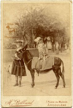 The Antique Dog Photograph Gallery: The Dalmatian and the Donkey Antique Photos, Vintage Pictures, Vintage Photographs, Old Pictures, Photos With Dog, The Donkey, Dog Rules, Vintage Dog, Old Dogs