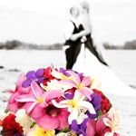 Nautilus Resort - specialists in tropical island style weddings Tropical Wedding Bouquets, Wedding Flowers, Nautilus, Colours, Island, Weddings, Holiday, Inspiration, Beautiful
