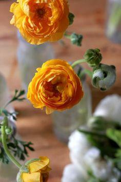 Frugal Flowers: How to Make Supermarket Ranunculus Look Like a Million Bucks: Gardenista #remodelingguide