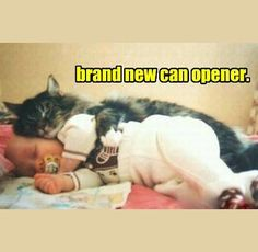 the new can opener
