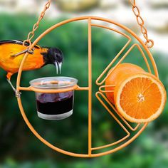 Here's to colorful birds in the garden! Fruit & Jelly attracts them... get in on spring migration!
