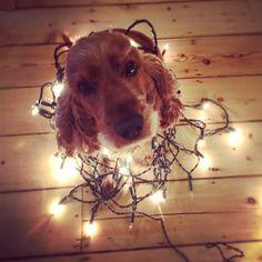 christmas dog christmas dog christmas animals christmas lights merry christmas christmas cards