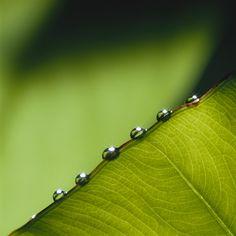 Fotosyntesen och klimatförändringen