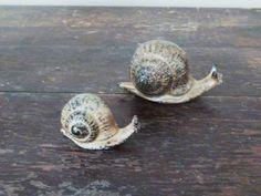 little snails