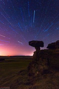 Gravitation by Grzegorz Piechowicz on Landscape Photos, Landscape Photography, Giant Mushroom, Star Trails, Stars And Moon, Night Skies, Spring Flowers, Fields, Scotland