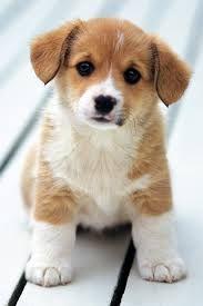 so cute love puppies!!!!!!!!!!!!!!!