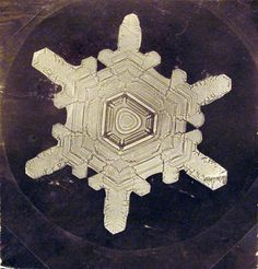 In 1885, nineteen-year-old Wilson A. Bentley took his first successful photomicrograph of a snow crystal. He went on to capture over 5000 such images before he died on Dec. 23, 1931.
