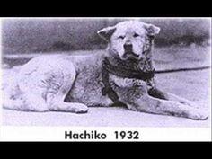 hachiko - Google Search
