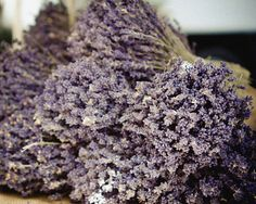 Lavender Photograph  France Photography  by AndrewRhodesPhoto, $28.00
