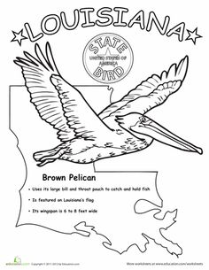 U.S. State Bird Coloring Pages | Education.com