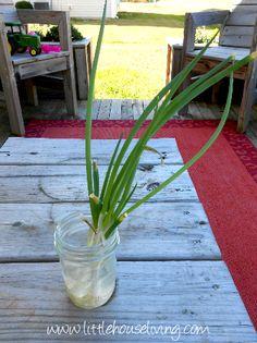 How to Re-Grow Veggies!
