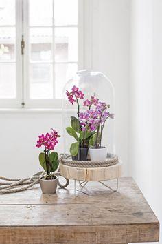 Zet een paar orchideeën bij elkaar in een groepje voor een rustig effect
