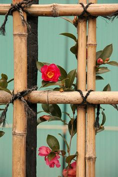 Japanese bamboo fence with Camellias for deck