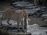 12 Days Kenya National Park Wildlife Safari