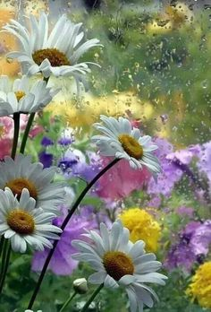 Find images and videos about nature, flowers and daisy on We Heart It - the app to get lost in what you love. Spring Flowers, Wild Flowers, Rain Flowers, Floral Flowers, Florals, Flower Wallpaper, Flower Photos, Belle Photo, Pretty Pictures