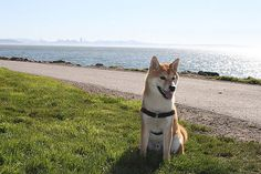 Point Isabel Dog Park has a glorious view of the San Francisco skyline. Photo via Yelp.
