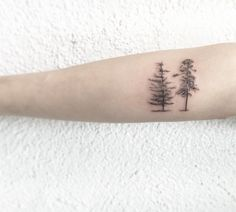 Pine Trees by Samantha Mancino