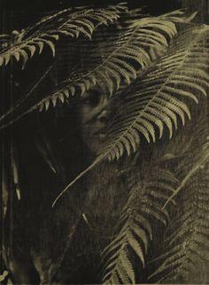 From Mariane Ibrahim Gallery, Zohra Opoku, Dicksonia Antarctica Screen print on textile, 79 × 105 cm Dicksonia Antarctica, Contemporary Photographers, African Art, Ghana, Printing On Fabric, Contemporary Art, Art Photography, Lion Sculpture, Art Gallery