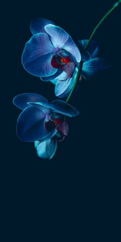 (notitle) (notitle) The Effective Pictures We Offer You About Flowers Wallpaper nature A quality pic Flower Background Wallpaper, Flower Backgrounds, Nature Wallpaper, Wallpaper Backgrounds, Orchid Wallpaper, Screen Wallpaper, Flowers Nature, Exotic Flowers, Blue Flowers