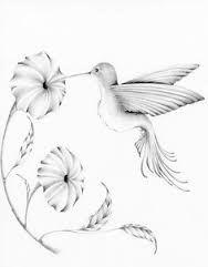 Resultado de imagem para simple hummingbird sketch