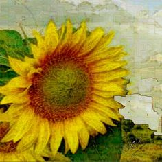Tuscan Sunflower Art Prints by Mary Rucker - Shop Canvas and Framed Wall Art Prints at Imagekind.com