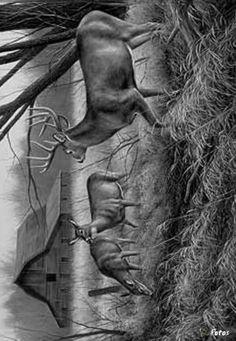 Coloring for adults - Kleuren voor volwassenen Wood Burning Stencils, Wood Burning Art, Stag Tattoo Design, Animal Drawings, Art Drawings, Adult Coloring, Coloring Pages, Black And White Art Drawing, Landscape Pencil Drawings