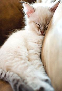 This looks like our Angie as a kitten.  :)