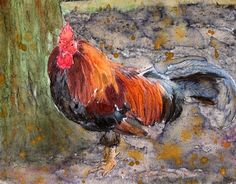 Brown Chicken Bird Fine Art Print Reproduction Watercolor Painting