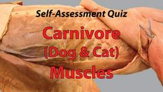 Carnivore Muscle Quiz