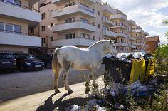 Floresti is one of Cluj-Napoca's newest neighborhoods. Romania, The Neighbourhood, Horses, Animals, The Neighborhood, Animales, Animaux, Animal, Animais