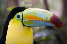 Замечательные животные обитающих в Коста-Рики на фотографиях путешественников