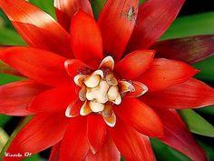 Bromeliads, Collection of TOP Nursery, Bogor - Indonesia