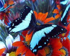 Original fotografía de flor mariposa negro por WittesHouseofFlowers