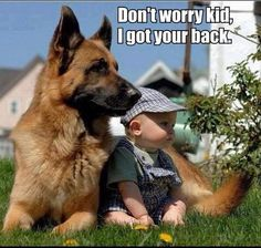 The great protector #German_Shepherd ...........click here to find out more http://googydog.com
