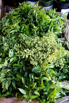 fresh herbs - love to use in my cooking and love to grow my own in container planters