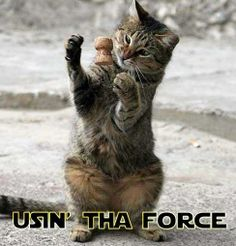 Cat using The Force