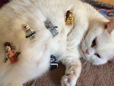 Tilù Lego Cat!!