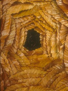 Inspiration Monday: Andy Goldsworthy