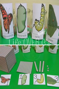 Learn about place value to the thousands place with these fun butterfly life-cycle manipulatives! Three separate levels included for up to tens, up to hundreds, and up to thousands. Great for K-2! $