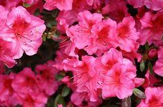 Teramo il 29 maggio la Festa dei Fiori