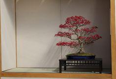 generation bonsai 2015 - 02