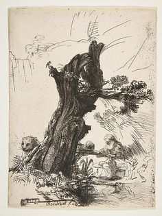 St. Jerome Beside a Pollard Willow,.Rembrandt Harmenszoon van Rijn, etching (1648).  Metropolitan Museum of Art, New York.