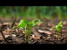 Back to Eden, over duurzaam en organisch tuinieren | Documentairenet.nl